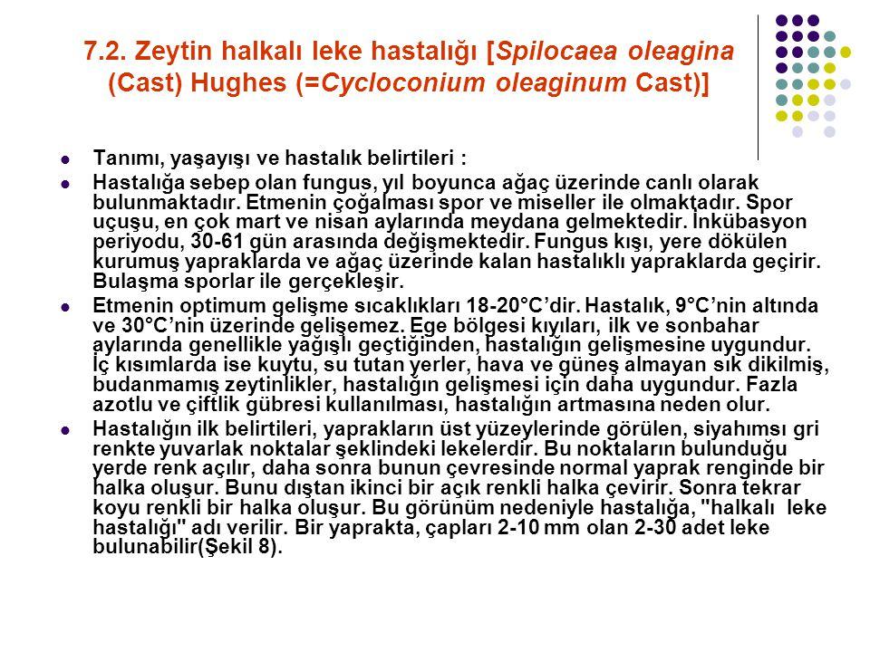 7.2. Zeytin halkalı leke hastalığı [Spilocaea oleagina (Cast) Hughes (=Cycloconium oleaginum Cast)]